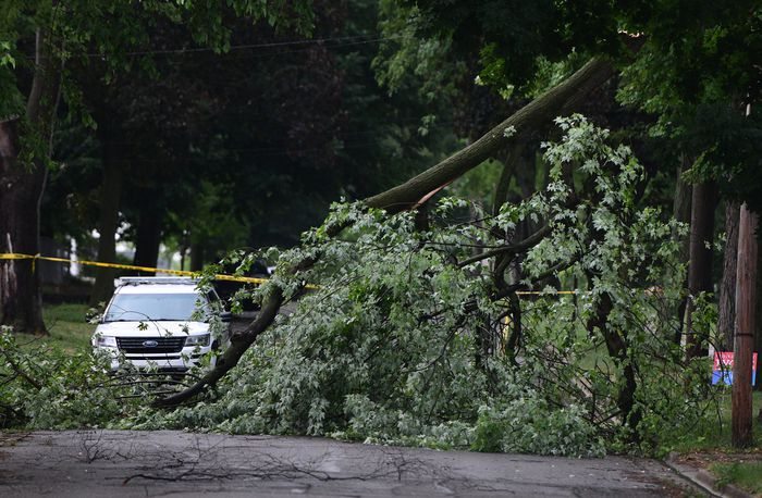 A downed tree blocks Maple Ave. in Jackson